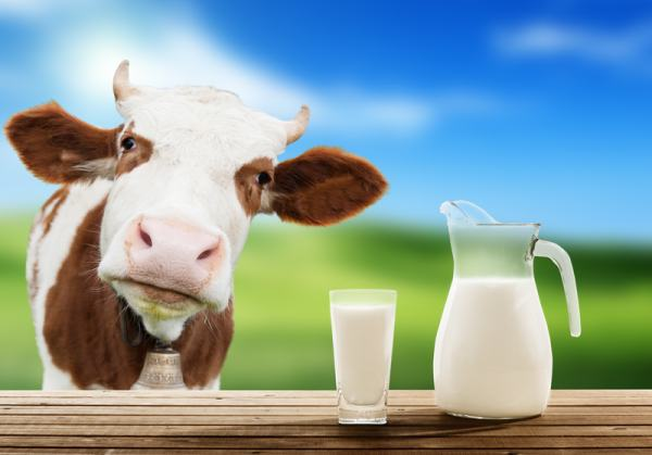 http://www.dreamstime.com/stock-photo-cow-milk-green-grass-image36450360